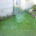 居間窓下の緑地